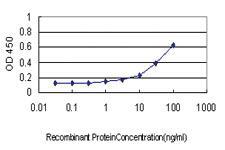 Anti-PGAP1 Mouse Monoclonal Antibody