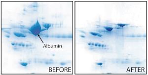 Albumin removal kit, AlbuminOUT™