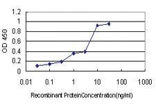 Anti-PIN1 Mouse Monoclonal Antibody