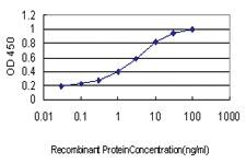 Anti-PLAG1 Mouse Monoclonal Antibody