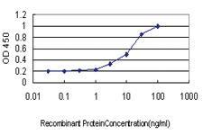 Anti-POLA1 Mouse Monoclonal Antibody