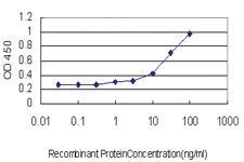 Anti-PPFIA4 Mouse Monoclonal Antibody